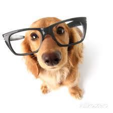 cão nerd